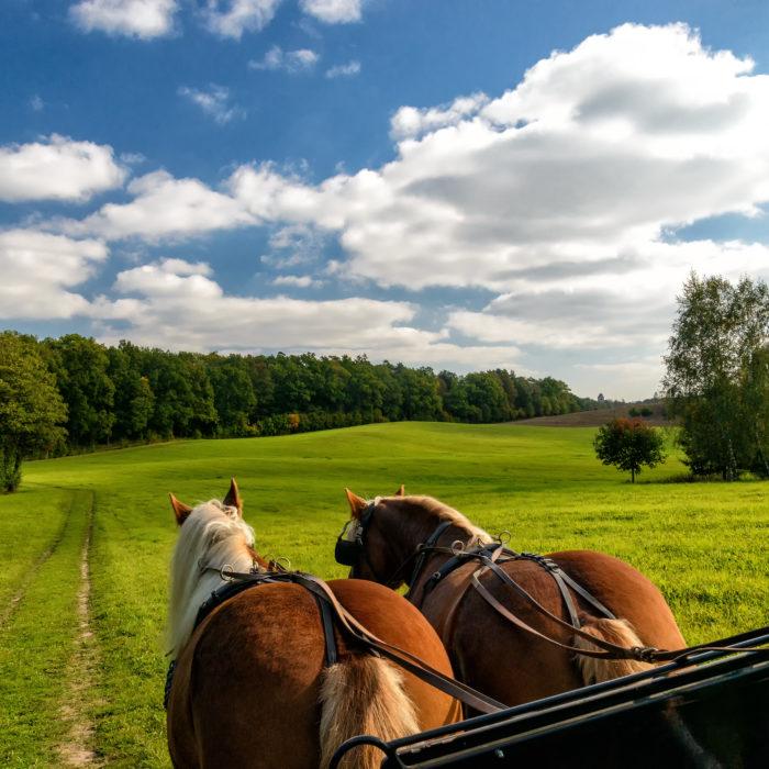 Svět radovánek koně